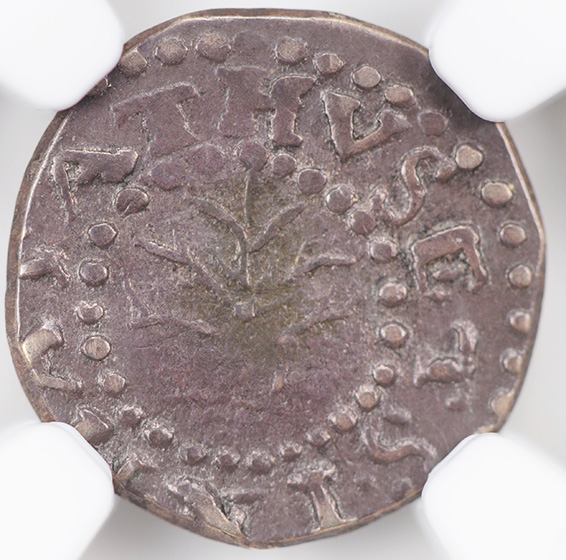 Picture of 1662 OAK TREE 2 PENCE, SMALL 2 MS61